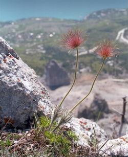андрей платонов цветок на земле слушать