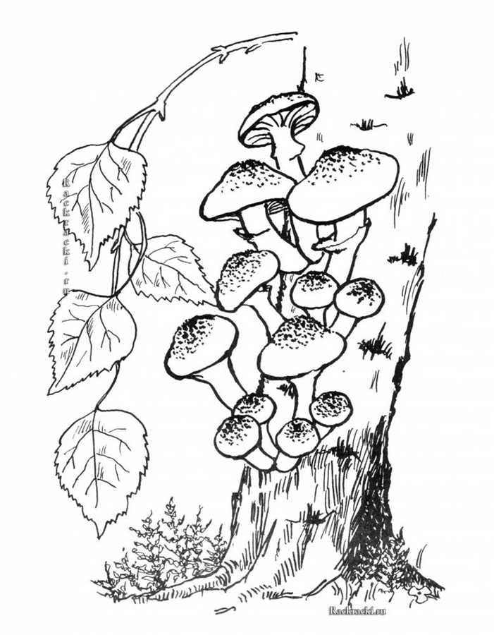 Лес и грибы раскраски