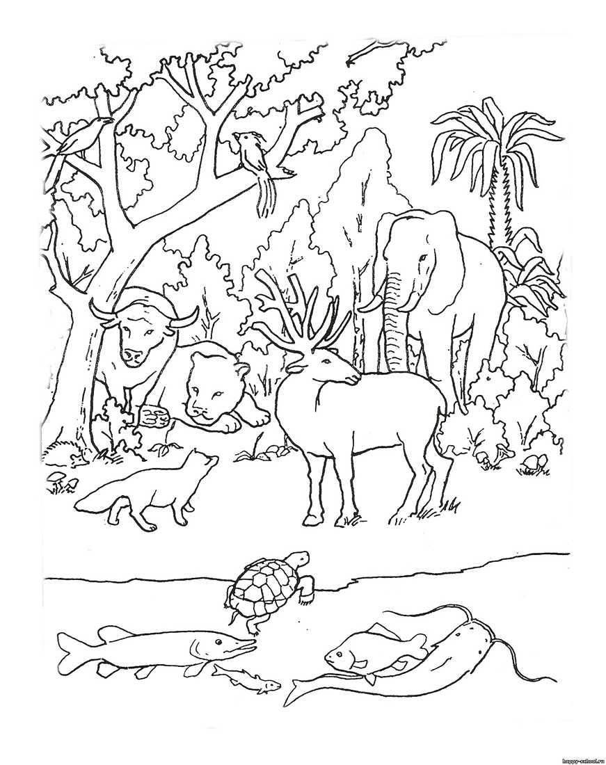 картинки животного мира раскраски одноклассница назвала