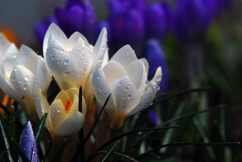 Фотографии весенних цветов