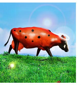 почему называется божья коровка