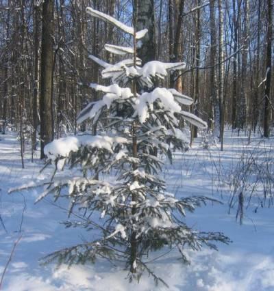 Шины на 13 зима цена авито