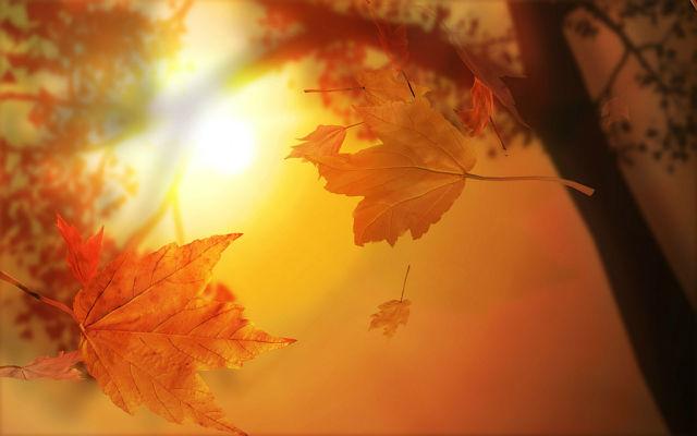 Промчалась эта осень очень быстро